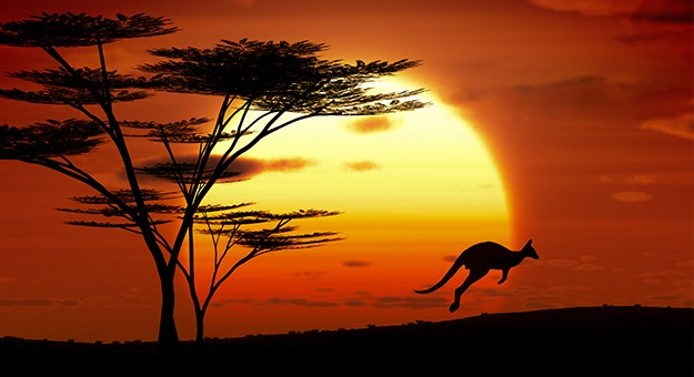 Kangaroo jumping in the Australian Outback